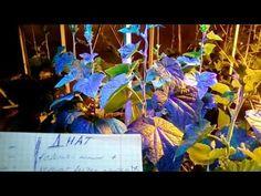 Освещение в теплице - Битва Led и ДНАТ ламп часть 1 - YouTube