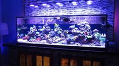 Image result for beautiful marine fish tank