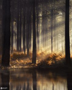 Goldstream - Sunrays shine through a golden forest in the Netherlands.