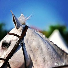 forelock, subscribe to 'bigeq' on Instagram for more beautiful hunter/jumper photos
