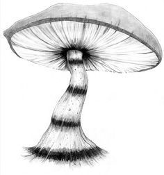 Pencil Drawings of Mushrooms | Caterpillar's Mushroom by HatterAndHareStudios