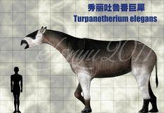 Turpanotherium elegans by sinammonite.deviantart.com on @deviantART