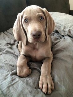 Cute dog I wish I had it but I already have two named Libby and Lucy