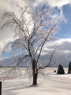 After Ice Storm of 2013/14 Bannister Michigan...