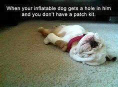#funnydogs #memes showing a flattened #dog lying on the floor www.thepetsworld.com
