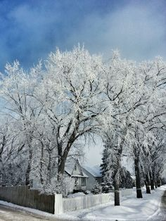 Hoarfrost in Winnipeg