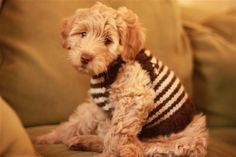 Puppy Vest free knitting pattern by Elizabeth Smith Knit Vest Pattern, Dog Pattern, Free Pattern, Knitting Projects, Knitting Patterns, Knitting Ideas, Free Knitting, Animal Sweater, Knitted Animals