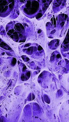 Purple spider webs