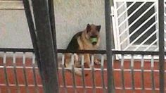 Dog tossed on the balcony for days with MUZZLE TAPED SHUT so he wouldn't bark! Act Now! | YouSignAnimals.org
