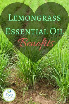 Lemongrass Essential Oil Benefits You Don't Want To Miss