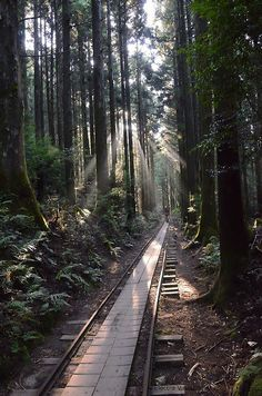 Kusagawa trail, Yakushima, Kagoshima, Japan.  Japan AND train tracks?? Could this picture get any better??