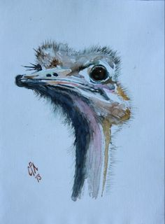 Water colour of a friendly ostrich at Redstone Hills near Calitzdorp.