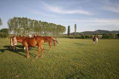 Kastamonu Binicilik Tesisleri İksir Resort Town