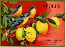 AEOLUS Brand Lemons - Santa Clara, California