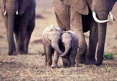 Little Elephant Buddies
