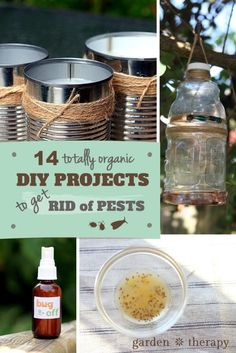 14 Totally Organic DIY Projects to Get Rid of Pests Safely and Naturally: citronella candles, bug spray, wasp and fruit fly traps, and more!