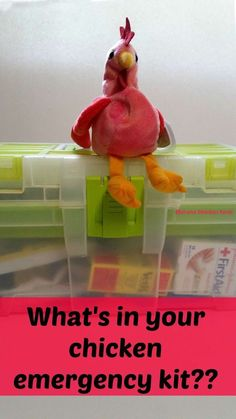 What is in your chicken emergency kit?