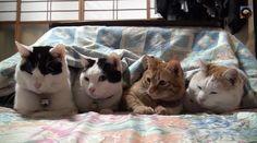 【動画】意地でもこたつから出ない猫4匹 http://skaihahiroi.blog.fc2.com/blog-entry-639.html …