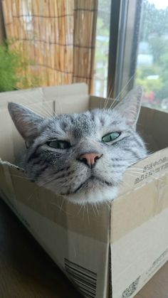 I'm in my box right now...what do you want?