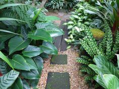 Dennis Hundscheidt's tropical-Asian themed garden in Sunnybank, Brisbane