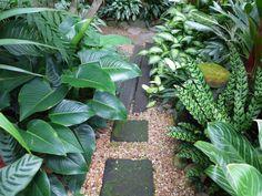 Dennis Hundscheidt's tropical-Asian themed garden in Sunnybank, Brisbane