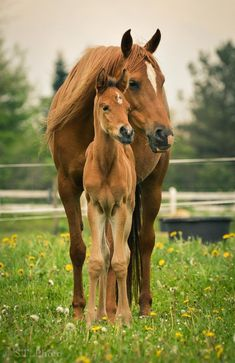 Things that make you go AWW! Like puppies, bunnies, babies, and so on. A place for really cute pictures and videos! Most Beautiful Horses, Pretty Horses, Horse Love, Animals Beautiful, Cute Baby Horses, Baby Animals Super Cute, Cute Little Animals, Horse Photos, Horse Pictures
