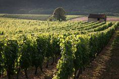 Toutes les tailles | Cabane de vigne - Vignoble de Cahors | Flickr: partage de photos!