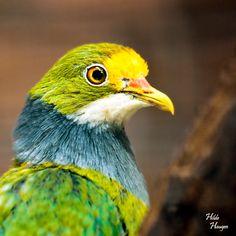 Colorful Dove by ~Romanara
