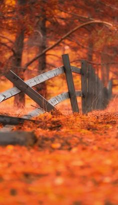 Find images and videos about autumn, orange and leaves on We Heart It - the app to get lost in what you love. Autumn Scenes, Seasons Of The Year, Fall Pictures, Image Hd, Belle Photo, Autumn Leaves, Fallen Leaves, Autumn Nature, Autumn Fall