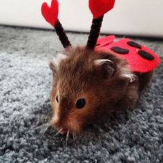 Perhaps your hamster was the fluffiest ladybug nature's ever encountered. | Show Us Your Pet's Best Halloween Costume