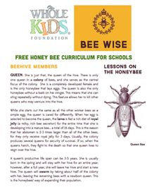 Together with The Bee Cause we offer FREE honey bee lessons for teachers.