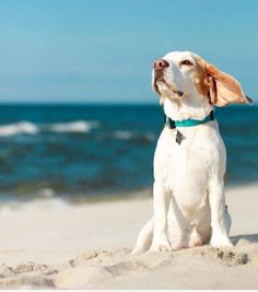 The sound of surf and wind in your ears--heaven!
