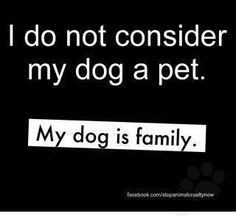 I do not consider my dog a pet.  My dog is family!