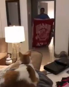 The cat forgot how to cat - Cute/ Tiere - Cute Funny Animals, Cute Baby Animals, Animals And Pets, Cute Cats, Funny Cats, Cat Fun, Cute Animal Videos, Funny Animal Pictures, I Love Cats