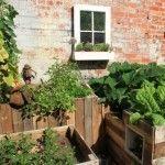 Edible Garden Design, Set-up & Maintenance - Leaf, Root & Fruit Gardening Services