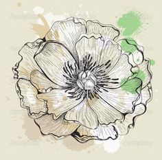 http://static6.depositphotos.com/1041273/655/v/950/depositphotos_6554802-Illustration-of-peony.jpg