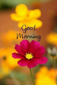 Beautiful good morning flowers images for love ~ Good morning inages Good Morning Friends Images, Good Morning Flowers Pictures, Good Morning Beautiful Pictures, Latest Good Morning Images, Good Morning Image Quotes, Cute Good Morning, Good Morning Picture, Morning Pictures, Morning Quotes