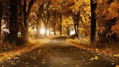 Amazing Autumn Background Wallpaper Yellow HD Wallpapers 1366×768 HD Wallpaper for Desktop Background