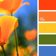 Contrasting colors palette a combination of rich colors: orange-red, yellow, green and blue. this color solution is well-suited for a children's Orange Color Palettes, Green Colour Palette, Blue Color Schemes, Green Colors, Color Combos, Rich Colors, Flower Colors, Blue Palette, Colours