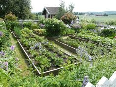 raised bed, in ground growing, kitchen garden, potager garden.