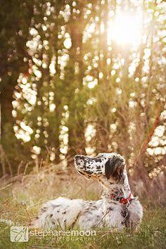 Dog Photography 8x12 Fine Art Dog Photography by stephaniemoon.