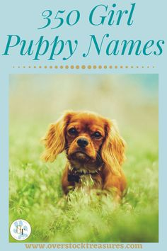 Hello pet lovers, dog lovers, dog owners and puppy owners. Are you a new pet owner? Did you just get a cute puppy or cute dog? Congrats! I created a list of unique dog names girl list. You are welcome to have my wonderful list of dog names girl unique list. This list is also for dog girl names for puppies. They are cut and unique puppy names female dogs.#puppy #puppynames #names #dognames #dog #doglove Puppies Names Female, Puppy Names, Pet Names, Girl Names, Pet Memorial Gifts, Cat Memorial, Cute Puppies, Cute Dogs, Unique Cat Names
