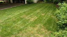 Votre pelouse a jaunit par endroit et vous ne savez pas quoi faire ?