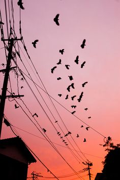 crows at sunset Aesthetic Backgrounds, Aesthetic Wallpapers, Landscape Photography, Nature Photography, Sky Aesthetic, Anime Scenery, Of Wallpaper, Gravure, Aesthetic Pictures