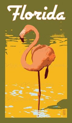 Florida #flamingo