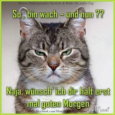 Morning Greeting, Animals And Pets, Good Morning, Funny Cats, Lol, Humor, Babies Fashion, Christian Dating, Dating Advice