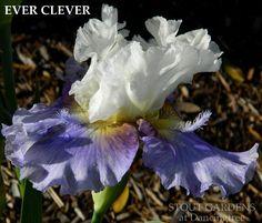 Iris EVER CLEVER