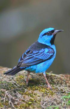 Kinds Of Birds, Birds 2, Wild Birds, Pretty Birds, Beautiful Birds, Animals Beautiful, Animals Of The World, Animals And Pets, Cute Animals