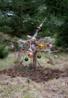 Helmut Smits A christmas tree dug out, turned 180 degrees and buried back in the ground revealing it's roots as a new christmas tree.