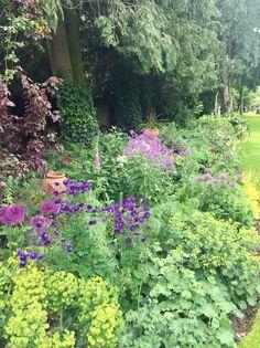Alliums, sweet rocket, aquilegia & euphorbia